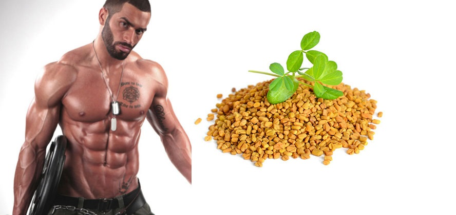 Can Fenugreek Help You to Increase Your Testosterone Level?