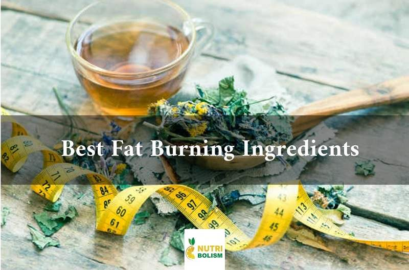 Best Fat Burning Ingredients